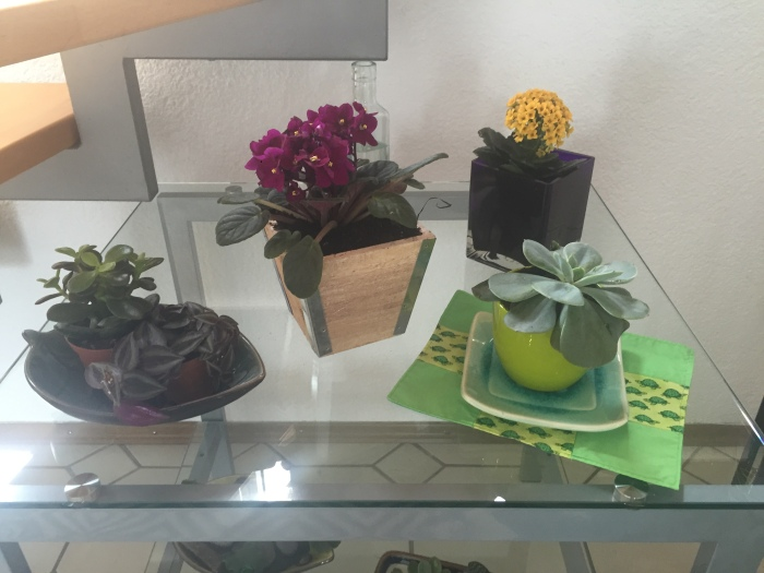 Home Decor: Create a space for Your plants!!!