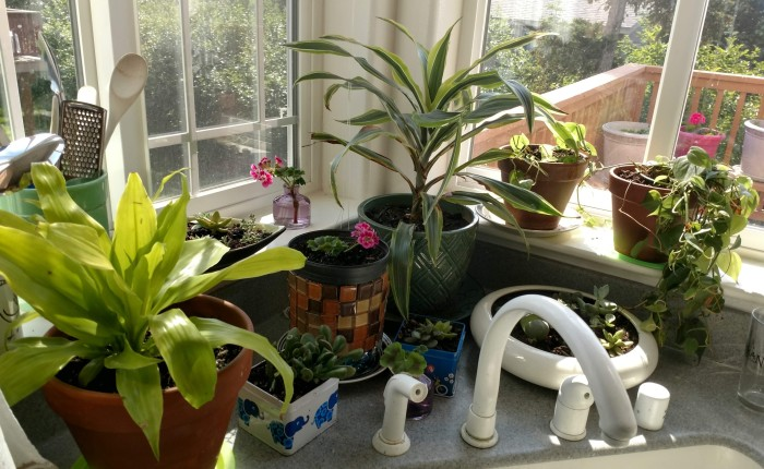 Kitchen Window Sill Gardens and Recycling Plant Containers